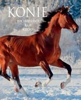Konie. Pochodzenie, Rasy, Cechy