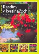 Rastliny v kvetináčoch
